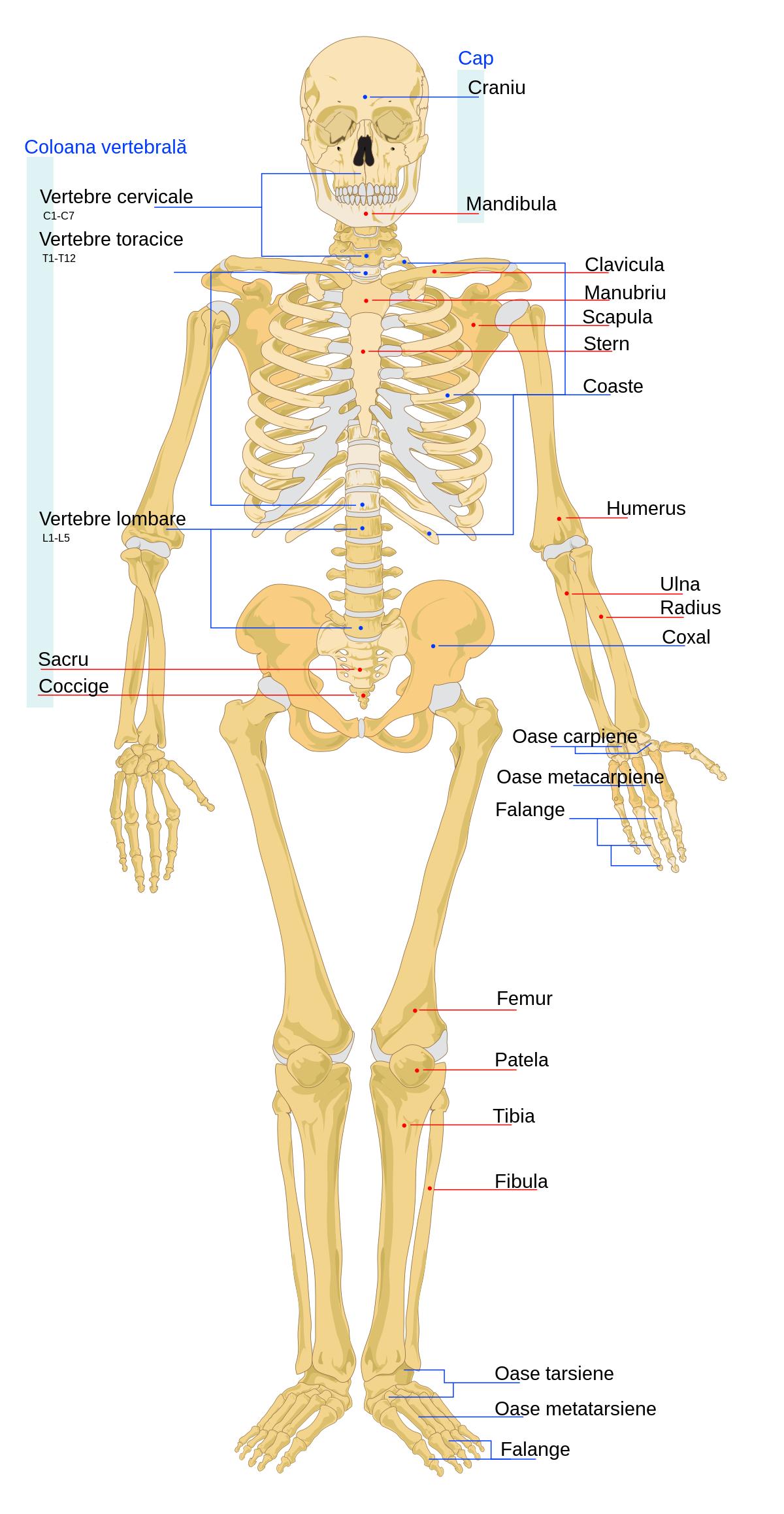 articulațiile întregului corp dureau cu adevărat ceea ce înseamnă boli articulare
