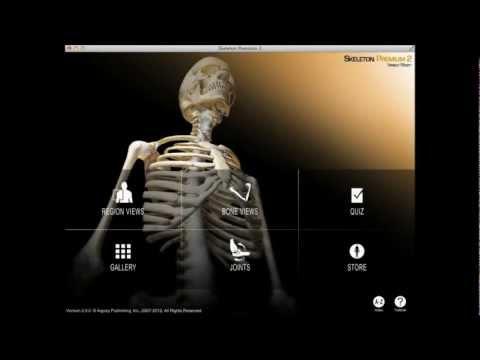 Articulațiile sorelului doară - Video CSID