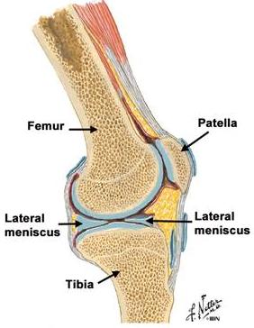 durere cu leziuni la meniscul genunchiului