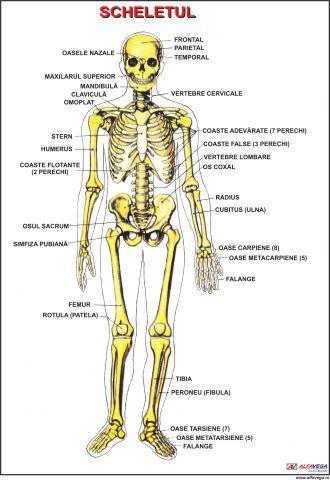 Cauze posibile de durere în coaste - Miozita -