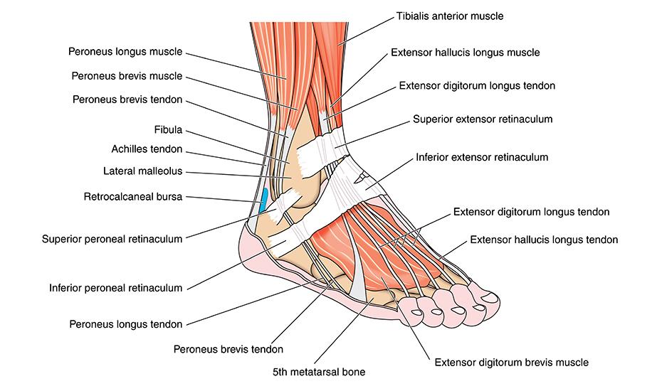 Ruperea simptomelor și tratamentului ligamentelor de gleznă