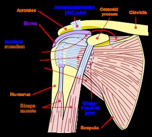 Artroza umărului descrisă de dr. Gabriel Ștefănescu