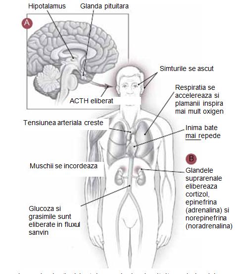 Coxartroza: Simptome, tratament si exercitii - Dr. Max   championsforlife.ro