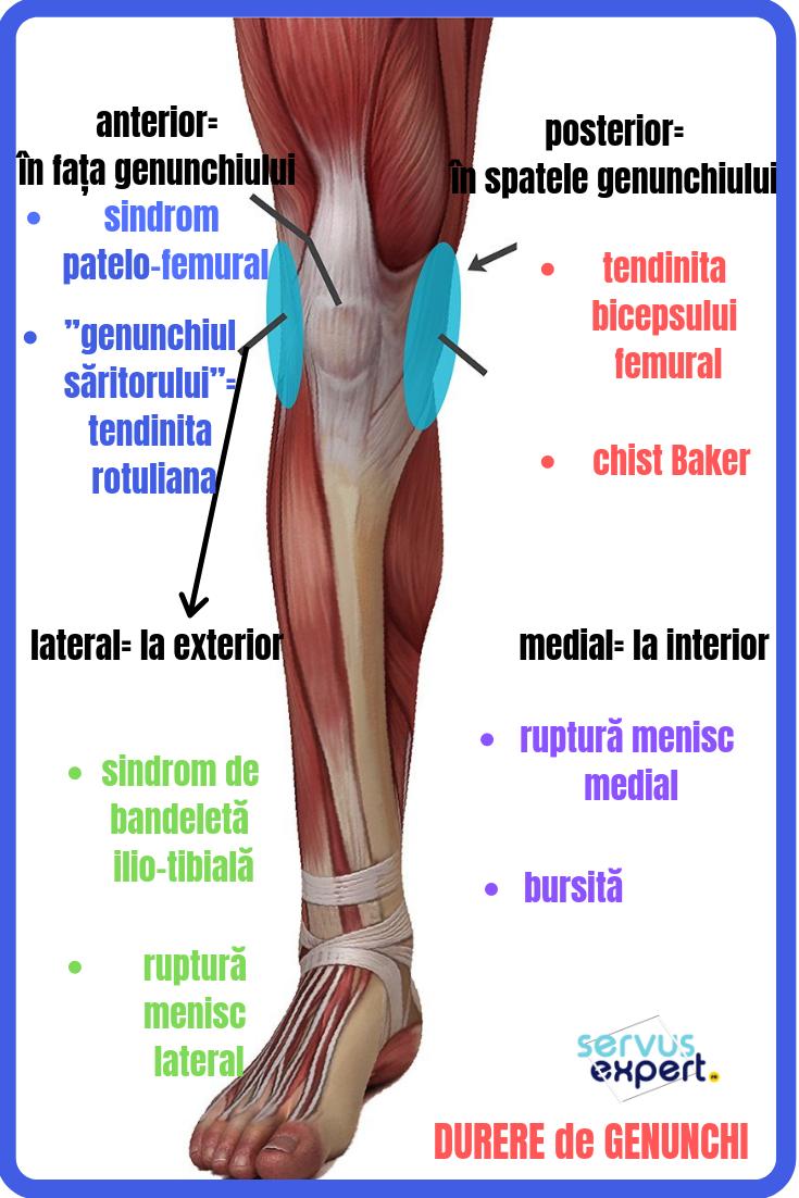 dureri de genunchi umane