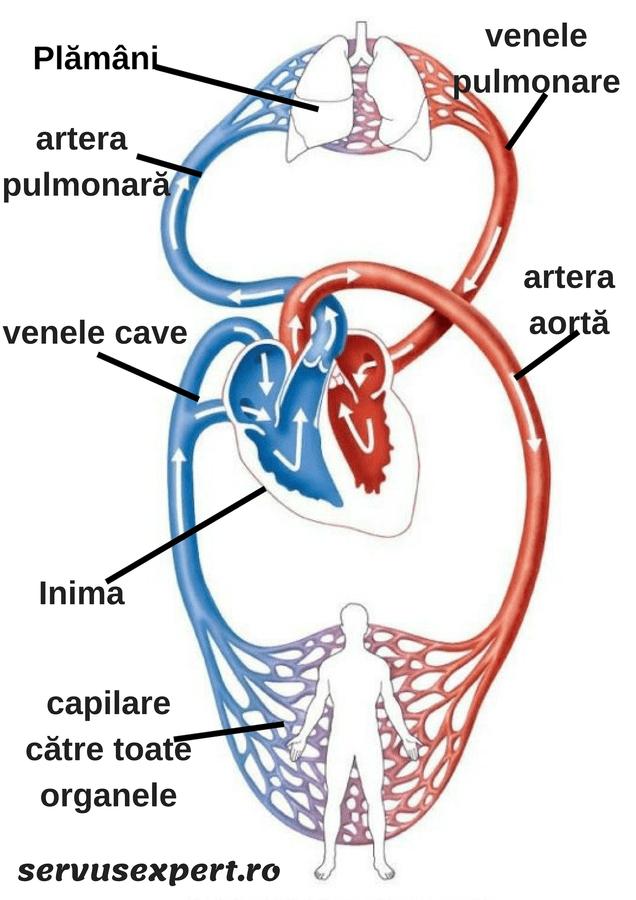 hipertensiunea arterială doare articulațiile