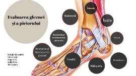 Durere de flexie în articulația gleznei