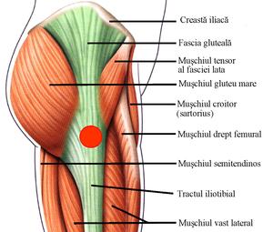 tratamentul mușchilor șoldului
