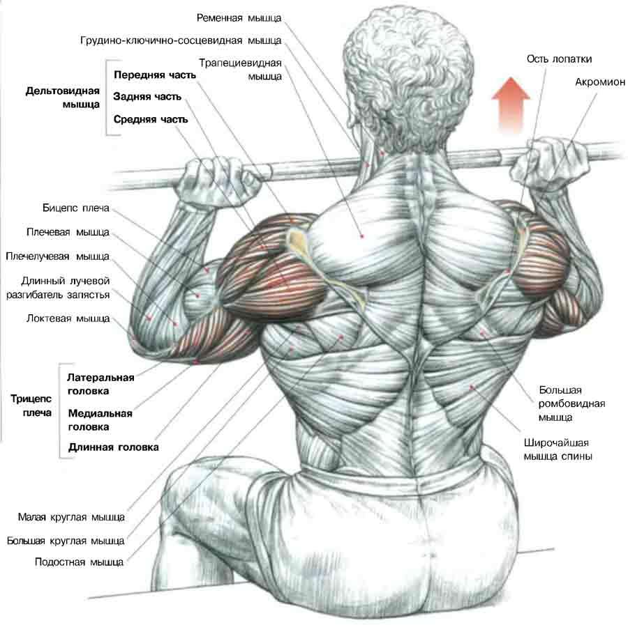 structura articulației umărului funcționarea rezolvării problemelor