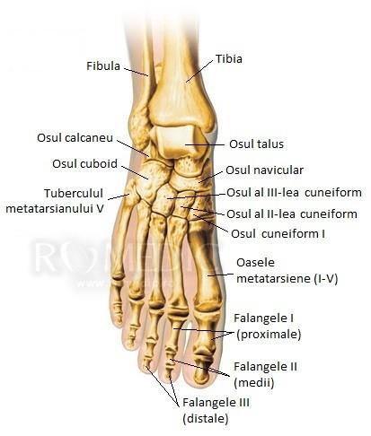 Tratamentul articulației metatarsofangianului piciorului - championsforlife.ro