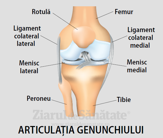 ligament pentru articulațiile genunchiului
