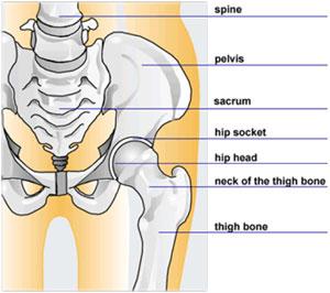durerea curge prin articulații durere de șold șchiop