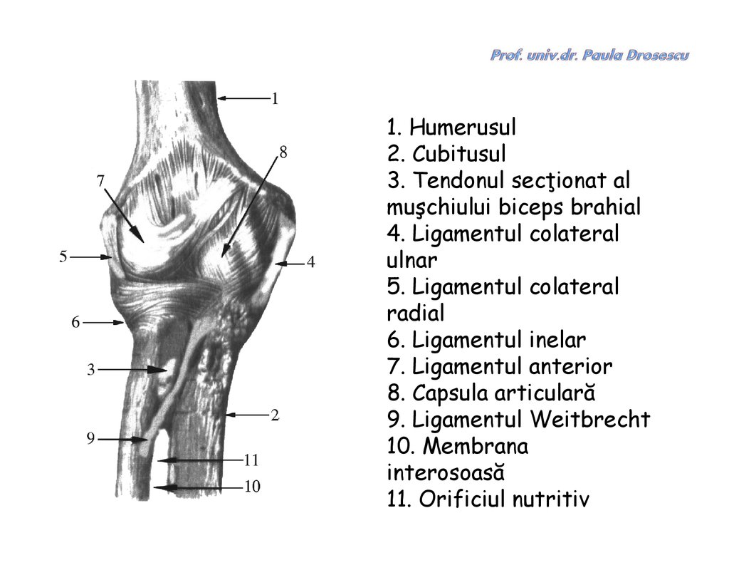 Mijloace pentru întărirea ligamentelor articulației genunchiului - Relevanța aditivilor