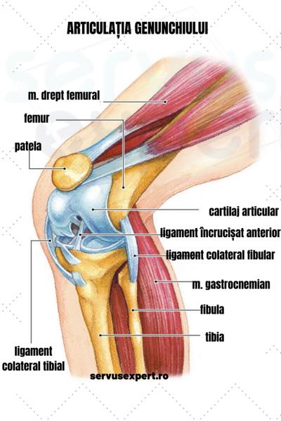 deteriorarea ligamentelor articulației genunchiului stâng umflarea picioarelor sub articulație