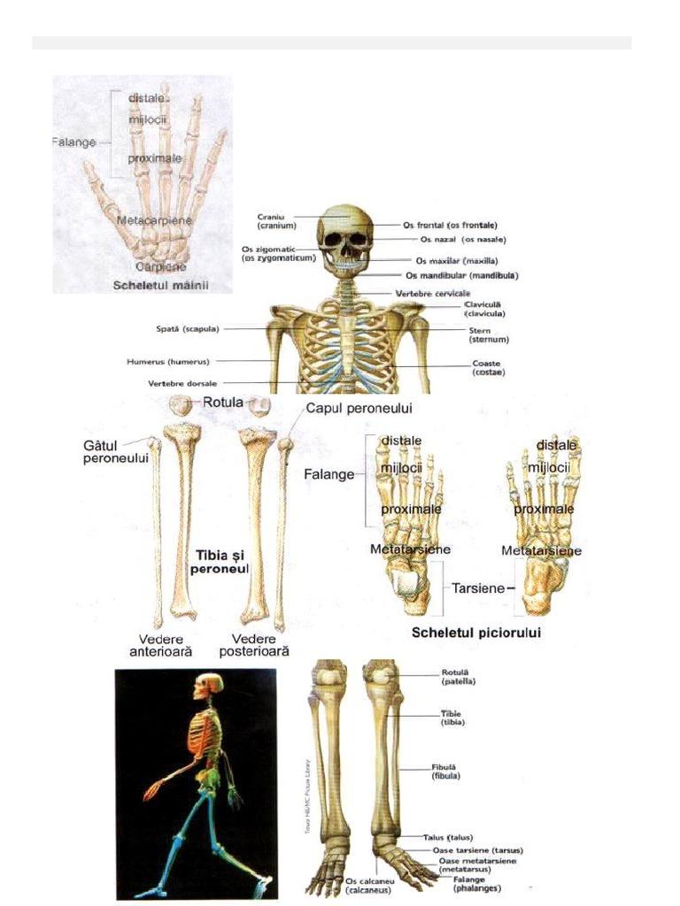 afectarea articulațiilor fătului unguent la încheietura mâinii