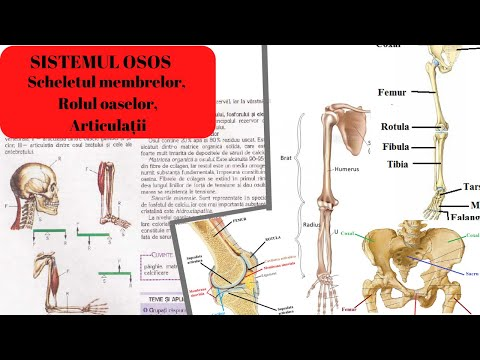 oasele dureroase rănesc articulațiile