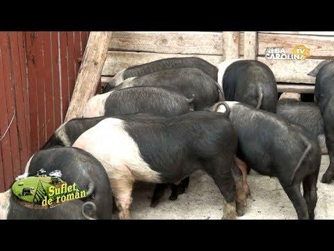 articulațiile rănesc un porc