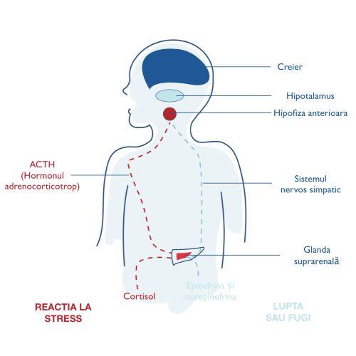 articulațiile doare din cauza stresului