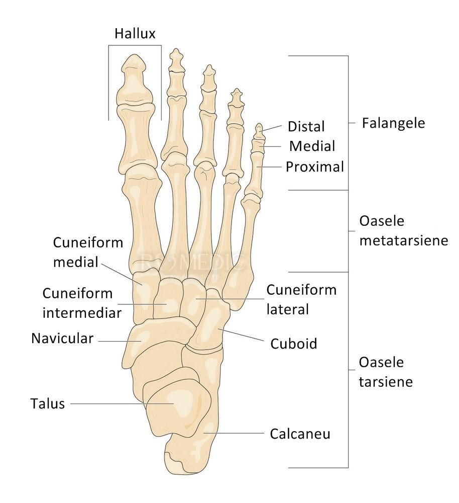 articulația falangelui pe picior doare