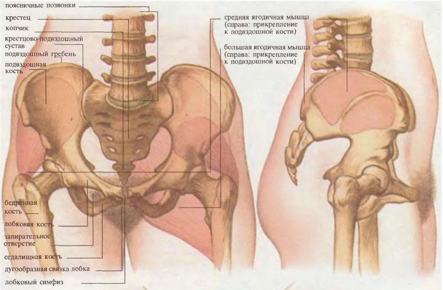 dureri la nivelul articulației sacroiliace Artros preparare articulară