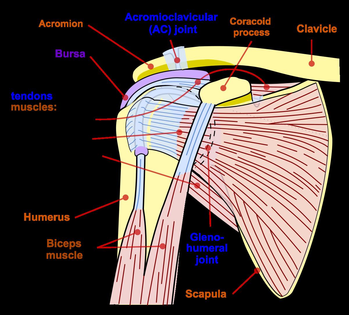 arată cum să tratezi articulația umărului
