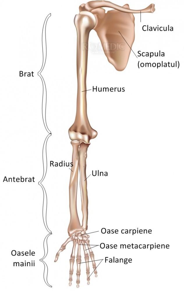 Cum să tratezi artrita novice