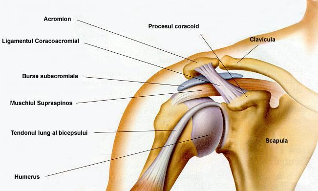 Durerea Articulațiilor Umărului La Ridicare - Articulația umărului doare la ridicarea brațelor