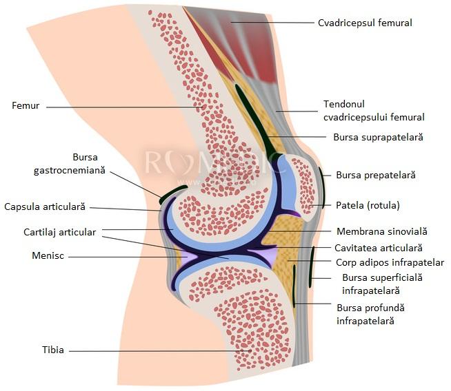 deteriorarea capsulei articulare a articulației cotului