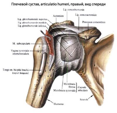 cum să restaurați articulația umărului după o accidentare