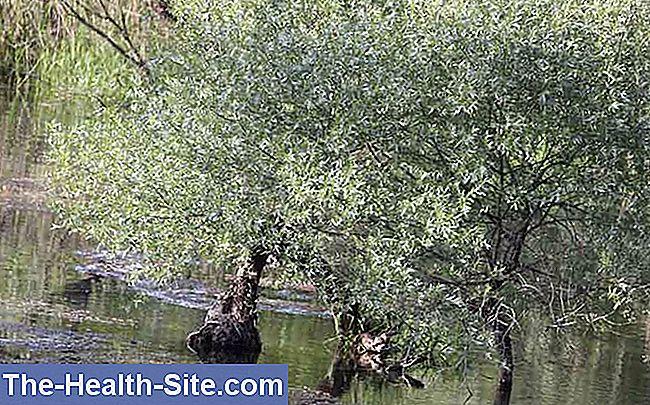 Ceai Salcie scoarta, L91, 50 g, Fares : Farmacia Tei