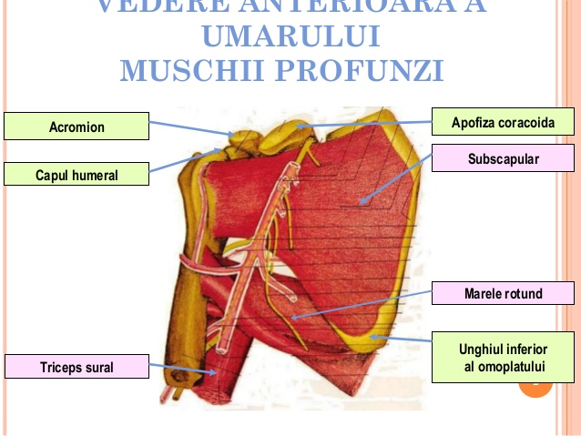 Periartrita scapulohumerala. De la sindromul de impingere la tendinita degenerativa | Medlife