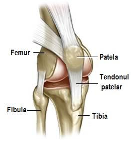 proeminența articulației genunchiului anti-inflamatorii unguente pentru articulații Preț