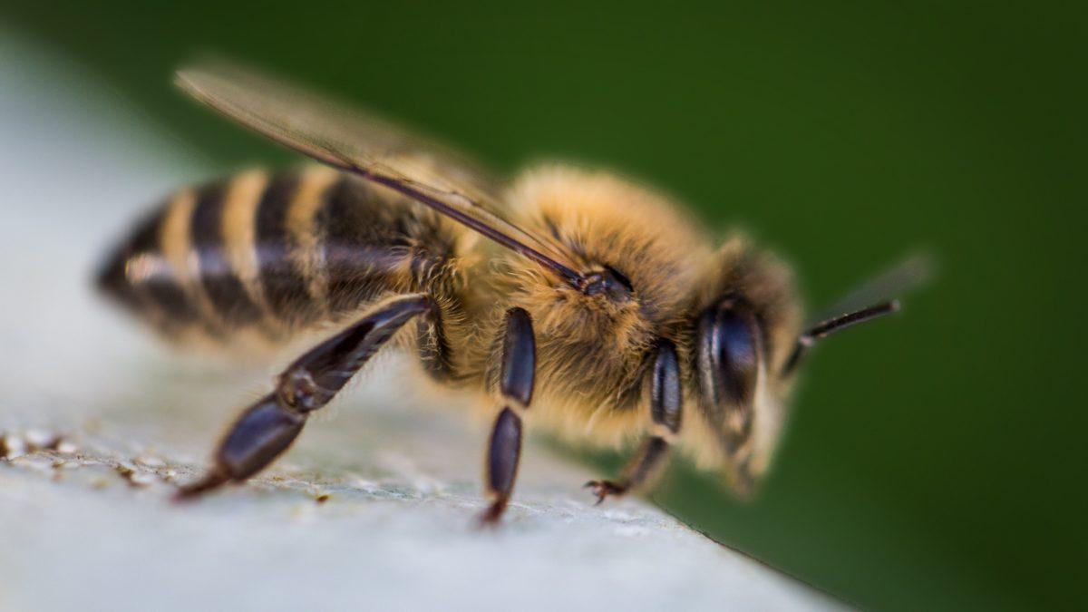 Primul ajutor la copii: intepaturi de insecte | championsforlife.ro