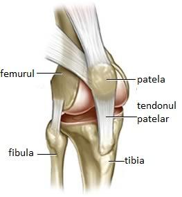 Periartrita unguentului genunchiului, Periartrite umăr Roentgen