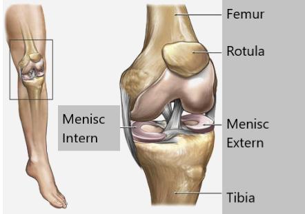 coloana vertebrală și toate articulațiile dureri la nivelul articulațiilor degetelor după rănire