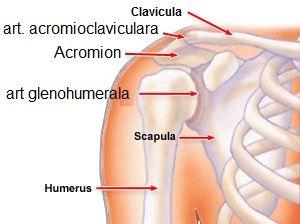 doa a simptomelor articulației umărului și tratament
