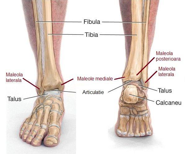 artroza articulațiilor inferioare ale piciorului