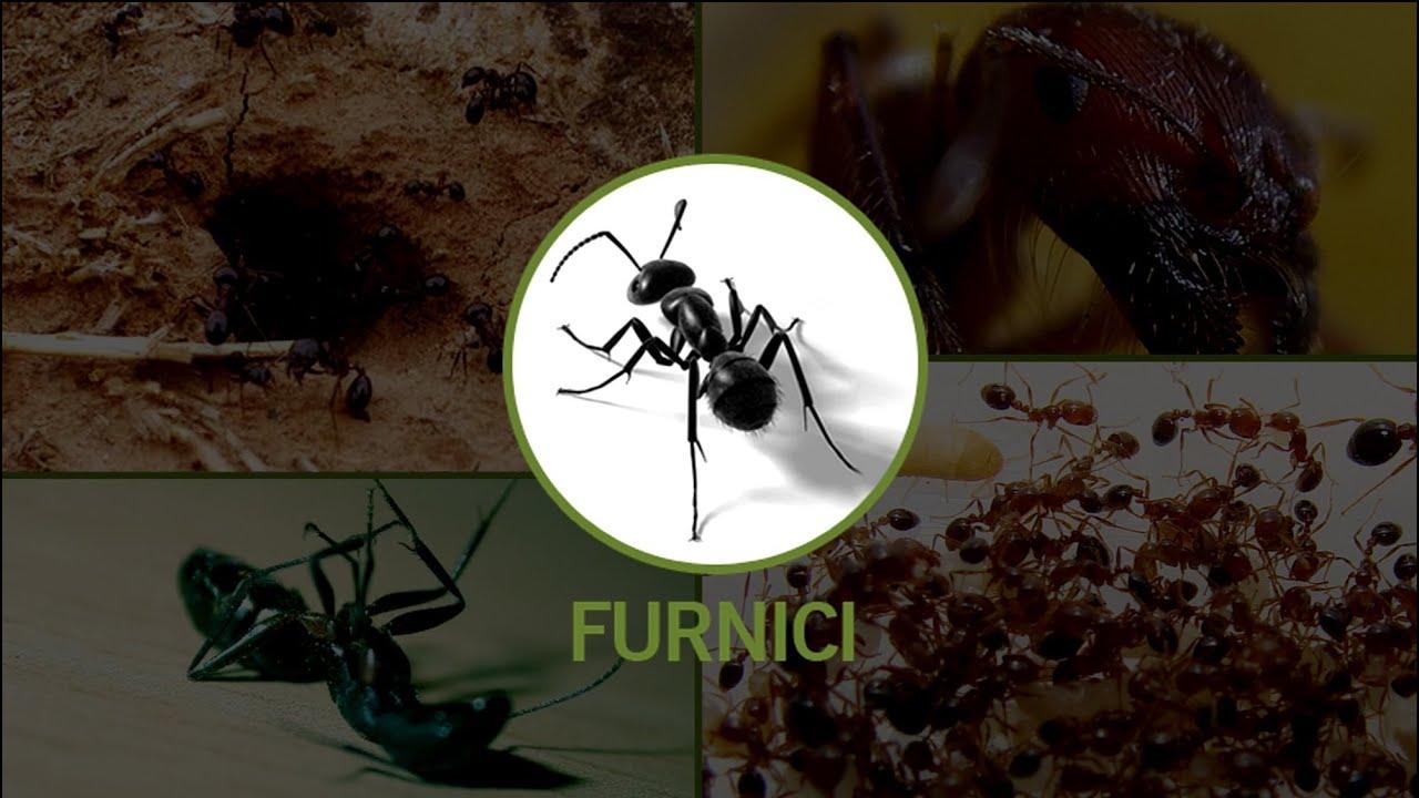 Tratamentul artrozei de furnici Introducere