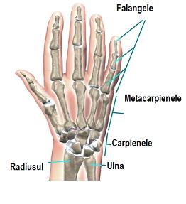 masaj pentru durere în articulațiile degetelor Pregătirea condrogardului pentru osteochondroză