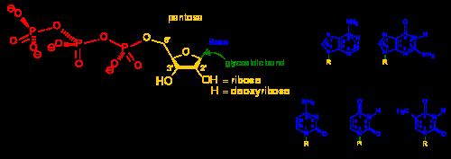 biochimie chimică comună