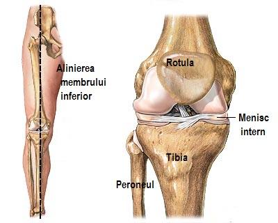Clicuri ale articulației genunchiului. Artigos do blog