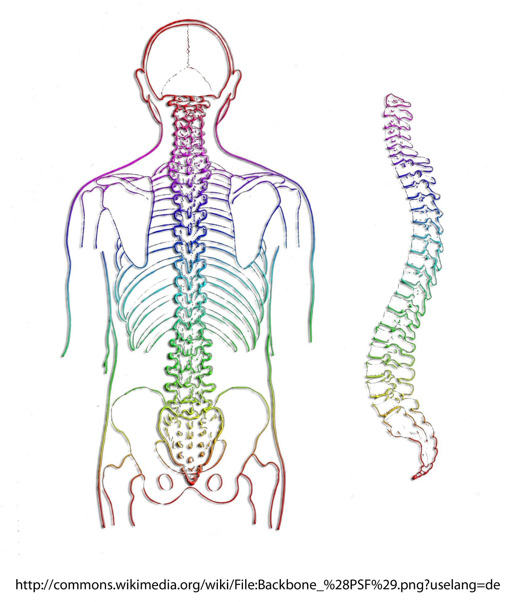 coloana vertebrală și site-ul bolilor articulare